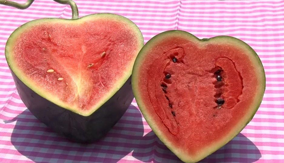 Ăn dưa hấu nóng hay mát?