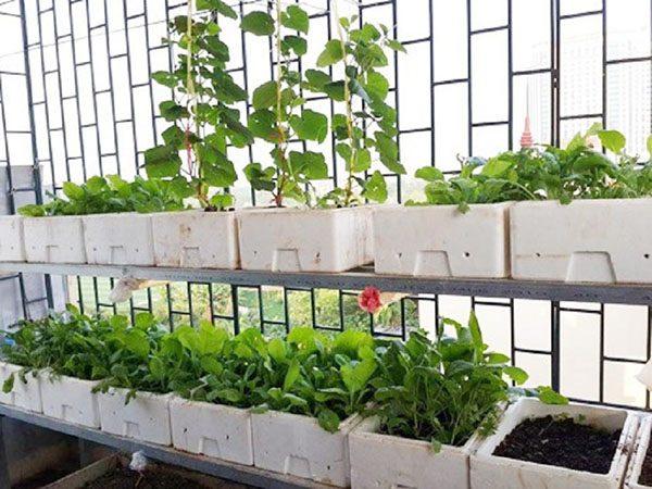 Sử dụng thùng xốp trồng rau