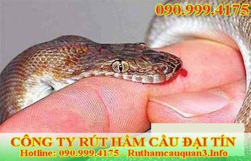 Nằm mơ thấy rắn cắn vào ngón tay điềm gì? tốt hay xấu?