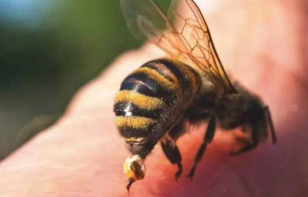 Nằm mơ thấy ong chích là điềm gì? Chọn con số nào may mắn